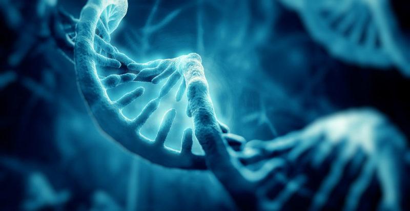 Genética Concepto Tipos Importancia Y Herencia Genética