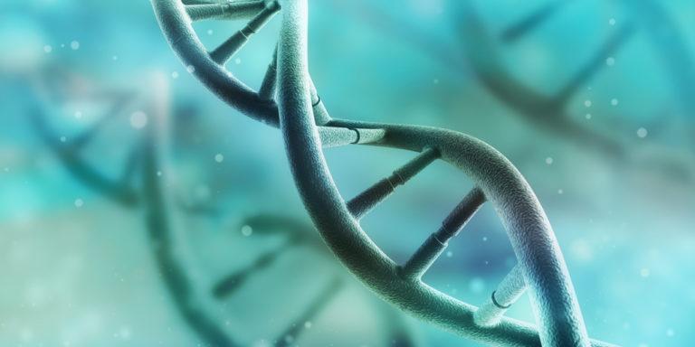 Genotipo - ADN - metabolismo