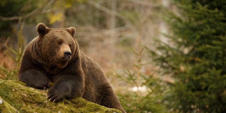 Zoología - oso