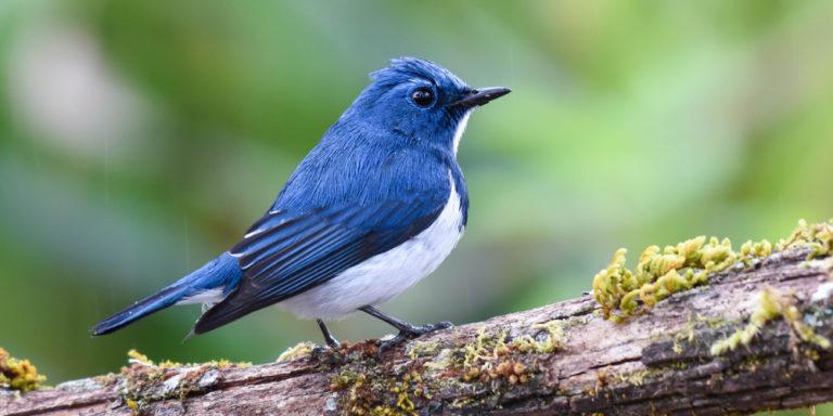 Organismo - pájaro - reino animal