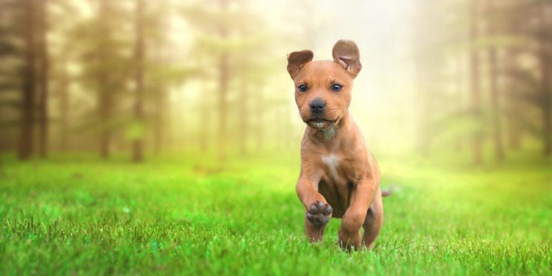 Animales domésticos - perro