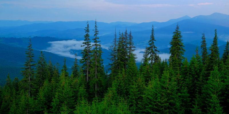 Reforestación - erosión del suelo