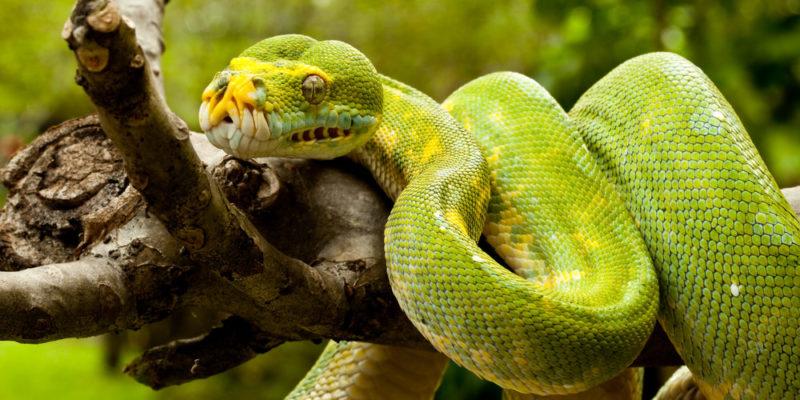 Reptiles - zoología