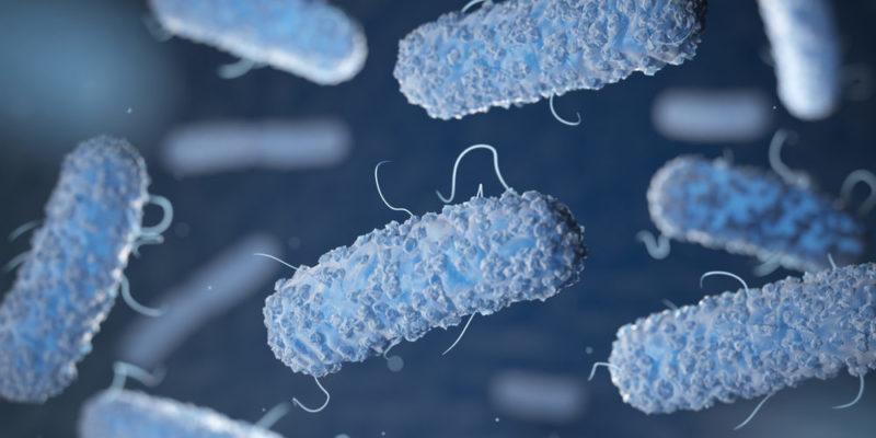Escherichia coli - microorganismos - microbios
