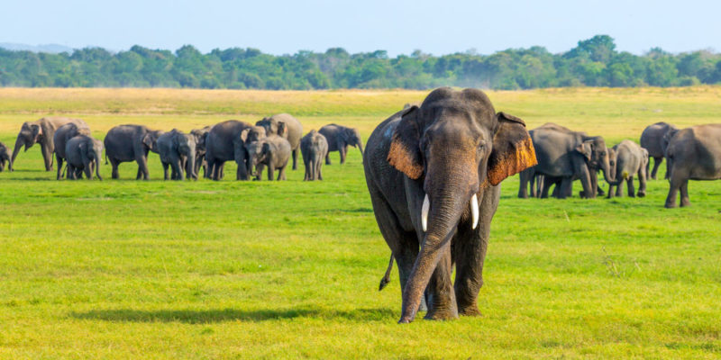 Elefante - animales salvajes
