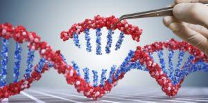 Organismos Genéticamente Modificados