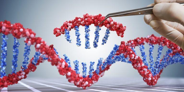 organismos geneticamente modificados ogm adn ingenieria genetica