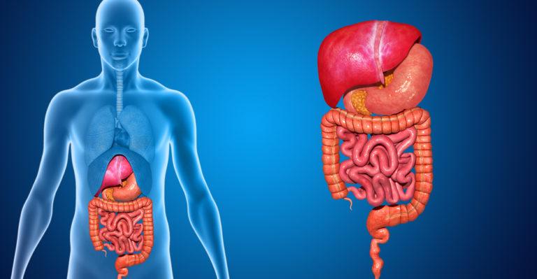 Sistema digestivo - sistemas biológicos