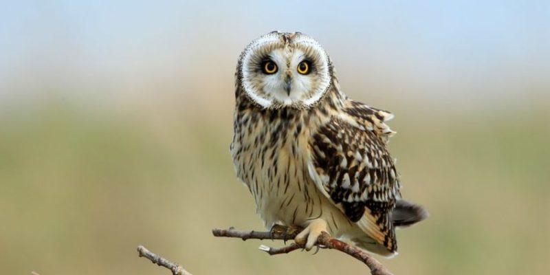 aves de rapiña presa rapaces depredador tipos buho