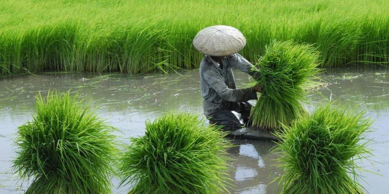 modelo de produccion asiatico marxismo china india