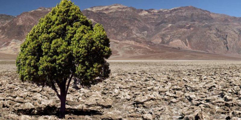 paradoja arbol desierto