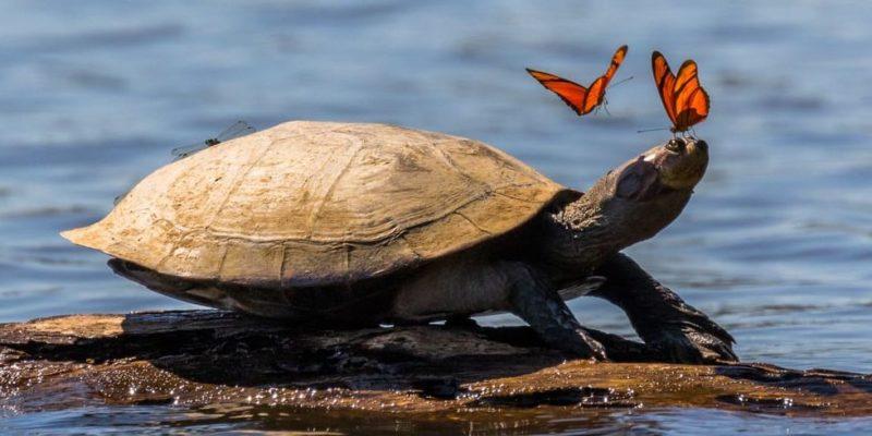 selva peruana peru amazonas fauna mariposas tortuga