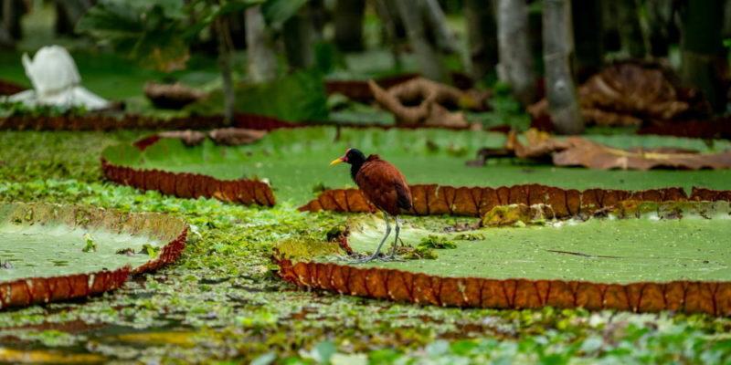 selva peruana peru amazonas flora
