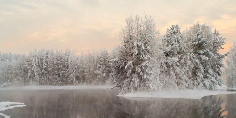 taiga bioma bosque clima invierno nieve hielo