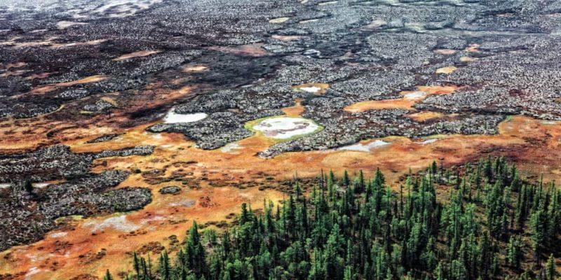 taiga bioma bosque tundra