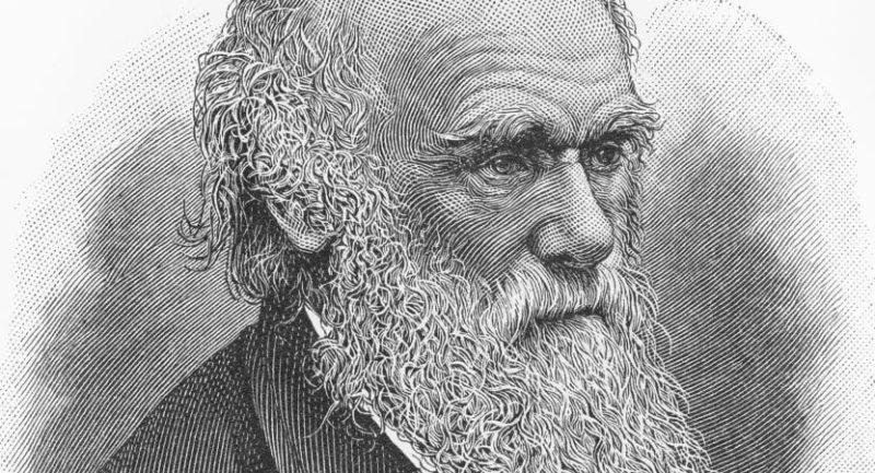 teoria de charles darwin seleccion natural origen de las especies evolucion biografia