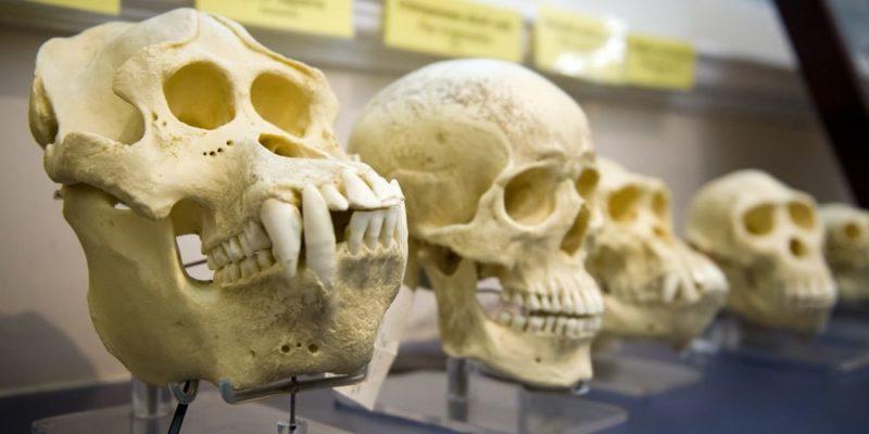 teoria de darwin seleccion natural origen de las especies evolucion craneos evidencia