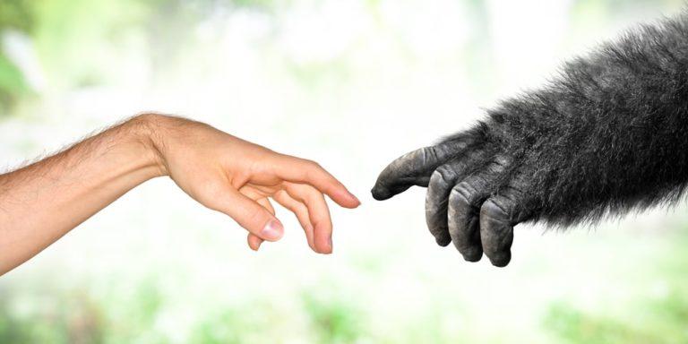 teoria de darwin seleccion natural origen de las especies evolucion