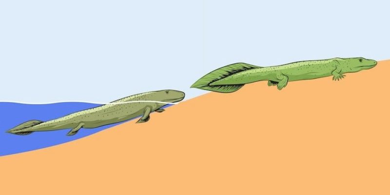 teoria de lamark evolucion historia