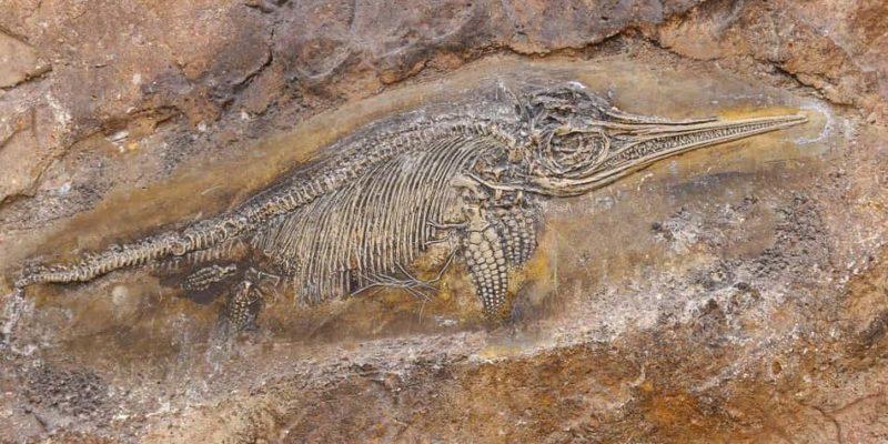teoria de lamark evolucion historia fosil