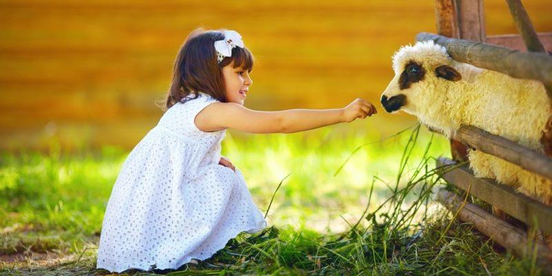teoria de los sistemas ecologia animales