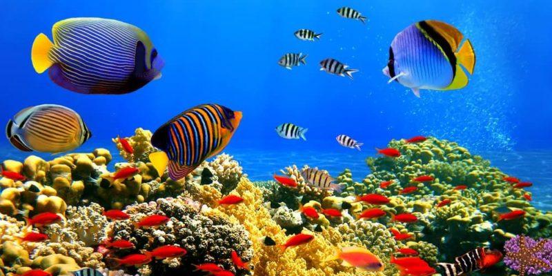 animales del mar marinos acuaticos peces coral