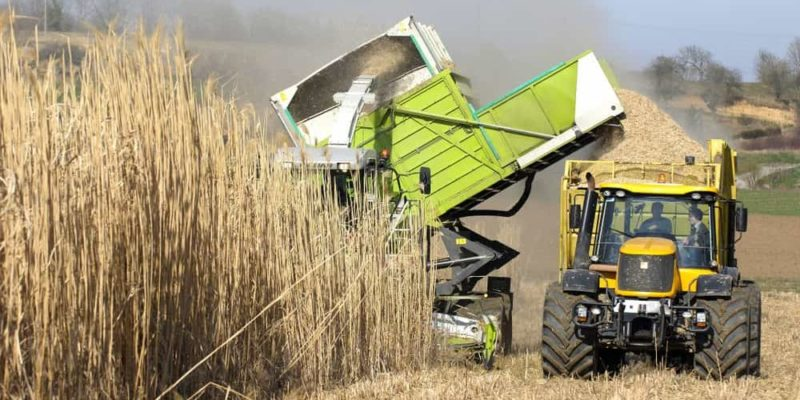 biomasa energia renovable ejemplo