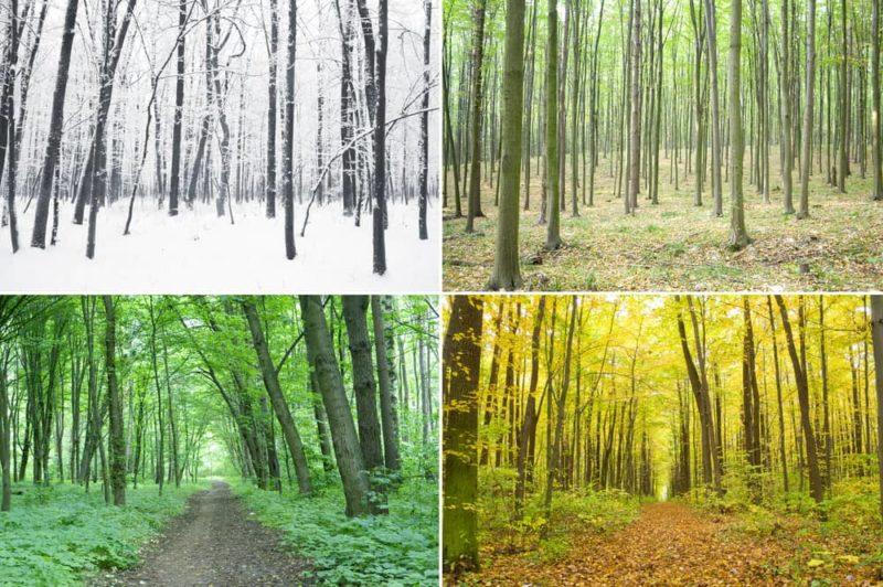 bosque caducifolio clima