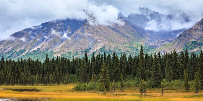 bosque templado alaska