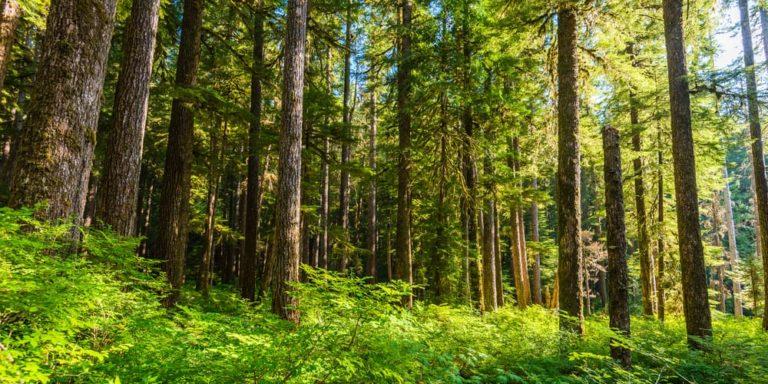 bosque templado ecosistema