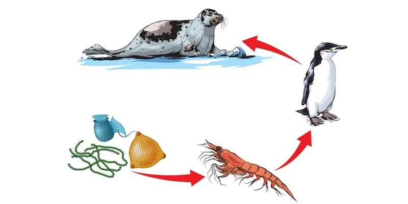 cadena trofica alimenticia acuatica-ecosistema
