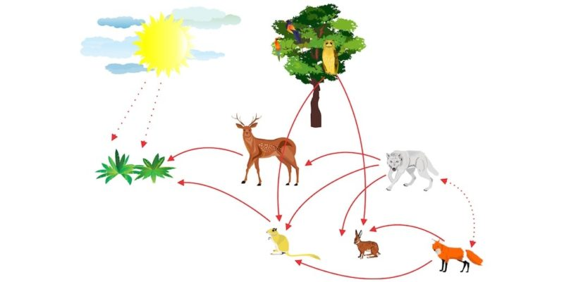 cadena trofica alimenticia-ecosistema