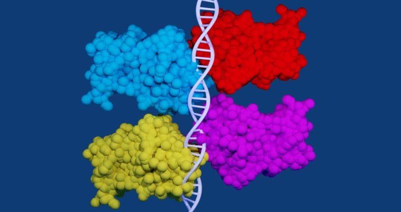 ciclo celular-g1 g2 s mitosis meiosis tetrametro p53