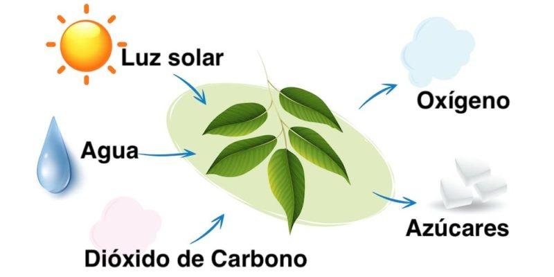 organismos productores fotosinteticos fotosintesis