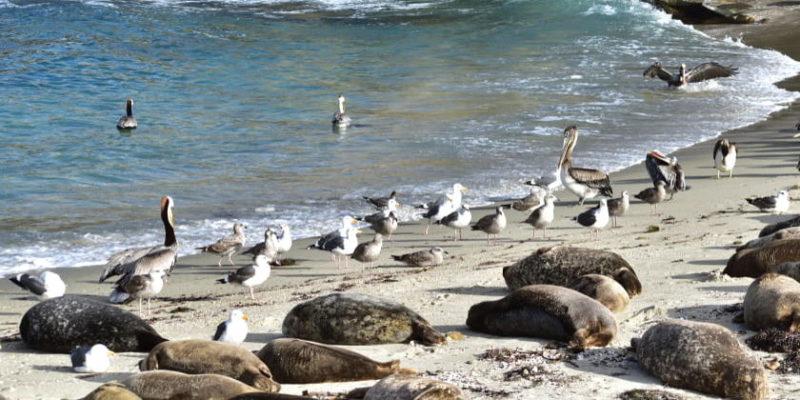 red trofica alimentaria acuatica mar