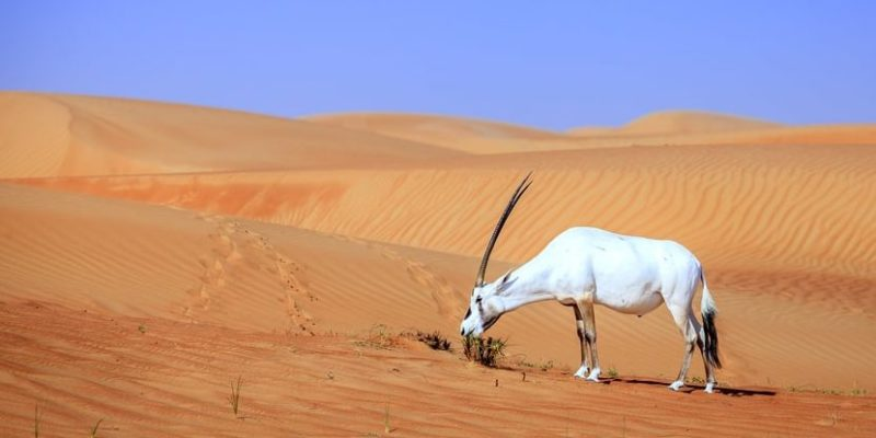 red trofica alimentaria desierto