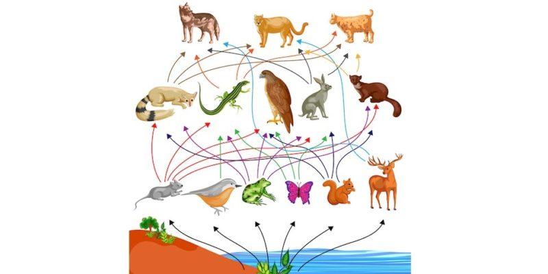 red trofica alimentaria ecosistema