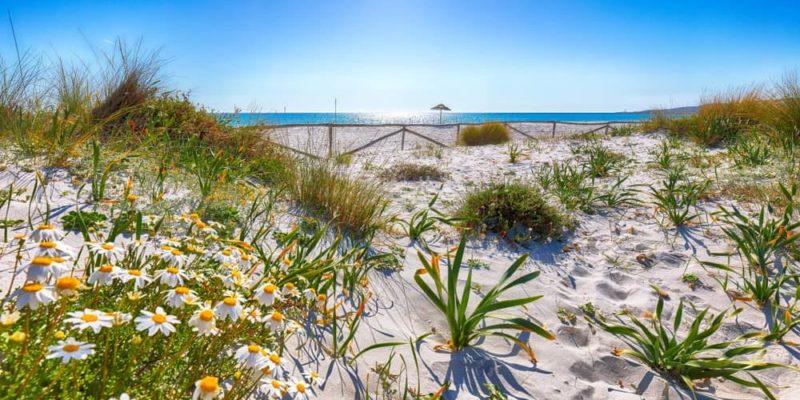 sucesion ecologica arena arbustos hierbas