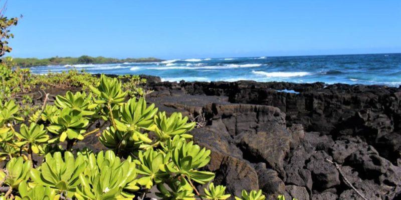 sucesion ecologica erupcion volcanica isla