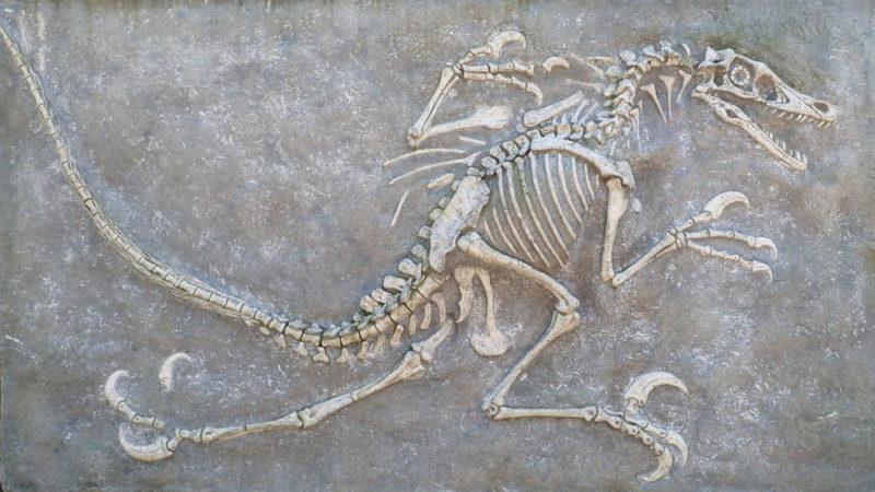geologia biologia paleontologia dinosaurio fosil