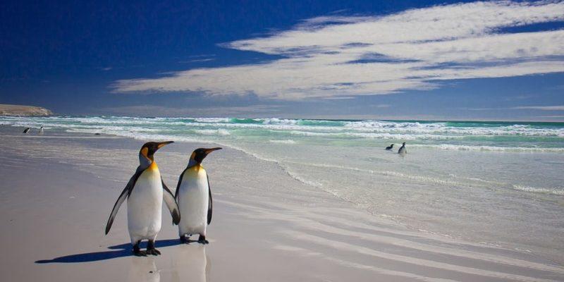 monogamia animales pinguinos