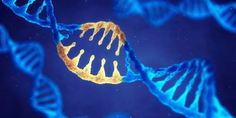 genes genetica adn