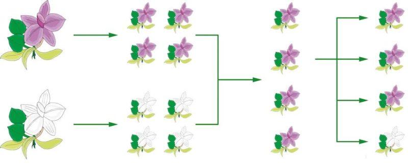 genes genetica adn mendel historia