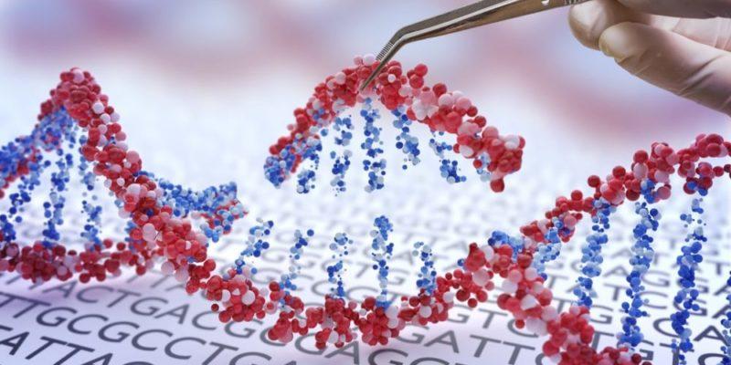 genes genetica adn terapia genica ingenieria