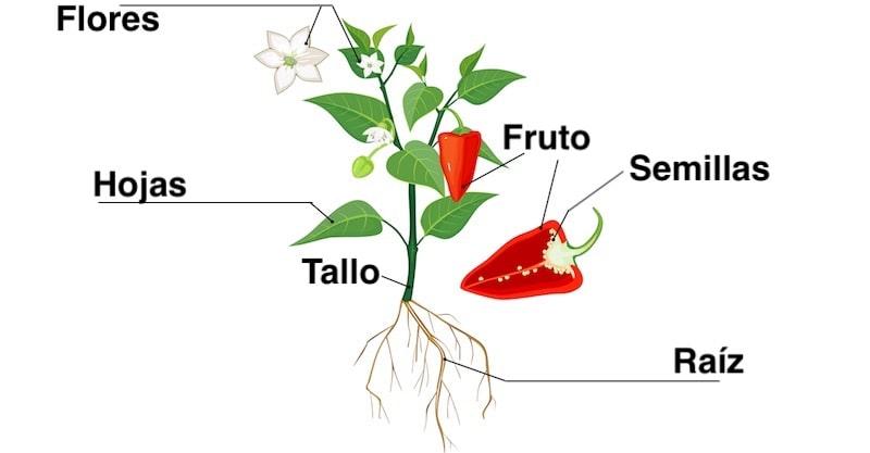 Plantas Concepto Tipos Partes Reproducción Y Características