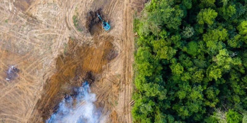 problemas ambientales deforestacion