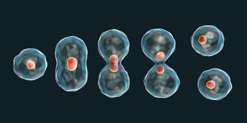 reproduccion celular division