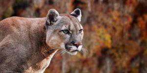 Animales de la Sierra