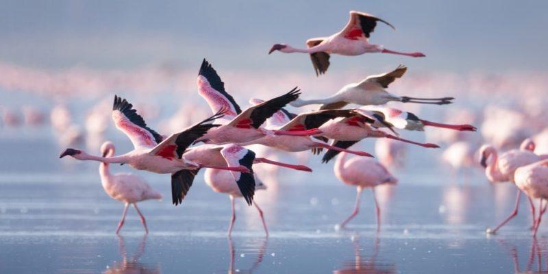 animales voladores flamencos