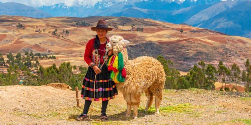 cultura inca economia ganaderia alpaca